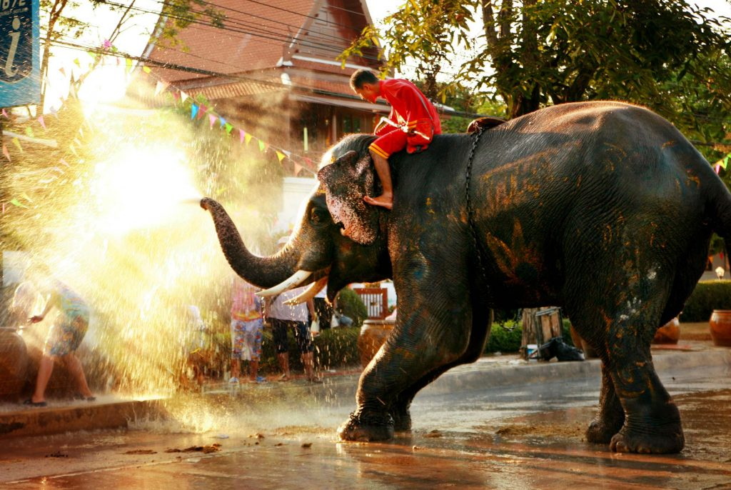 Elephants 'blessing' the crowd during Songkran in Thailand