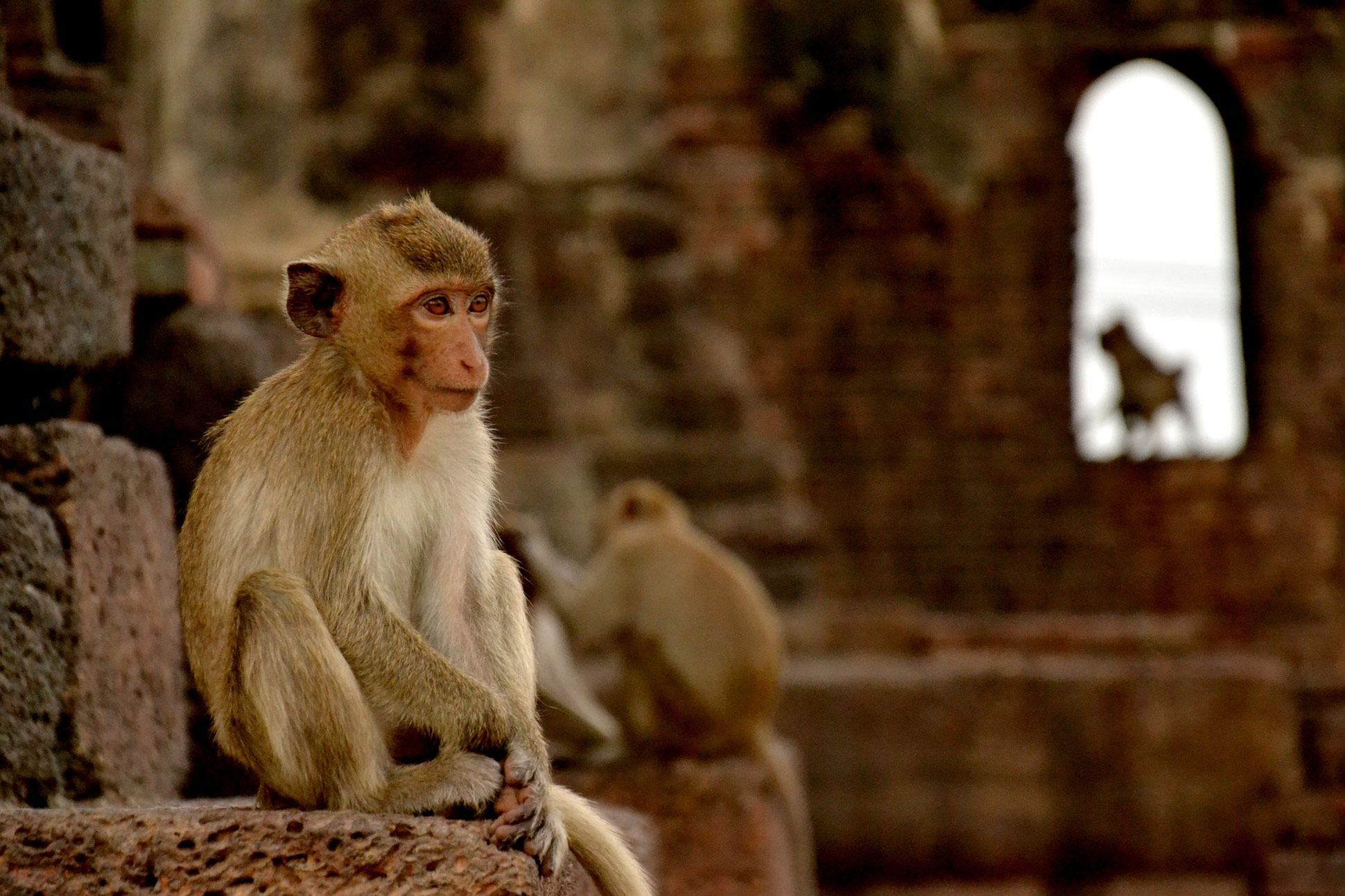 A monkey sitting in a temple in Lopburi, Thailand.