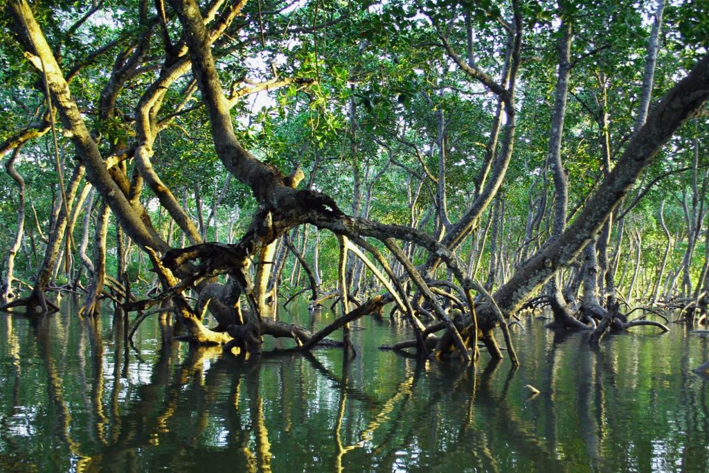 A mangrove forest bathed in morning light, Thailand