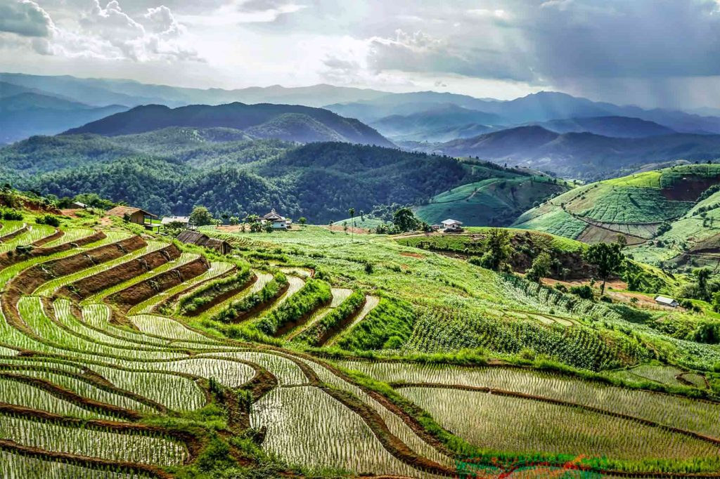 Mae Chaem rice fields makes for a gorgeous sight